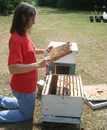 Jennifer Keller, an agricultural research technician, tends to one of more than 80 hives at the Lake Wheeler Road Field Laboratory.