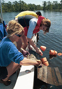 Researchers worked with volunteers to place 3 million oysters in Wilson Bay to act as natural water filters.