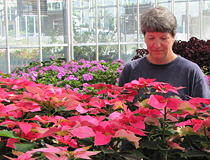 Horticulture technician Ingram McCall checks the progress of pink poinsettias in a greenhouse near campus.