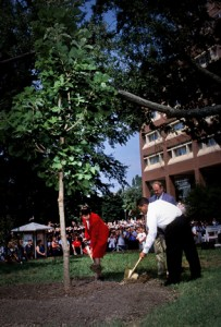 911 tree