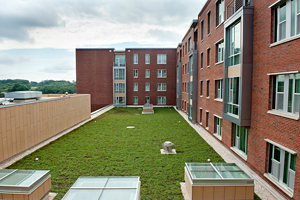 The rooftop garden absorbs rainwater at the new Wolf Ridge Apartments.