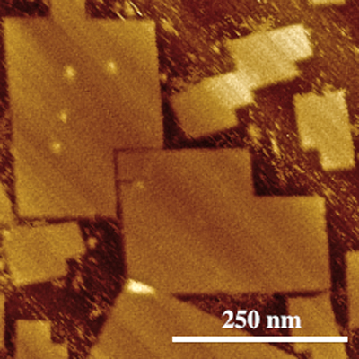 Atomic force microscopy image of DNA origami made using both the new technique (the large shapes) and the previous technique (the small ones). Image credit: Alexandria Marchi.