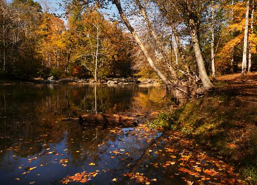Fall foliage at Eno River State Park