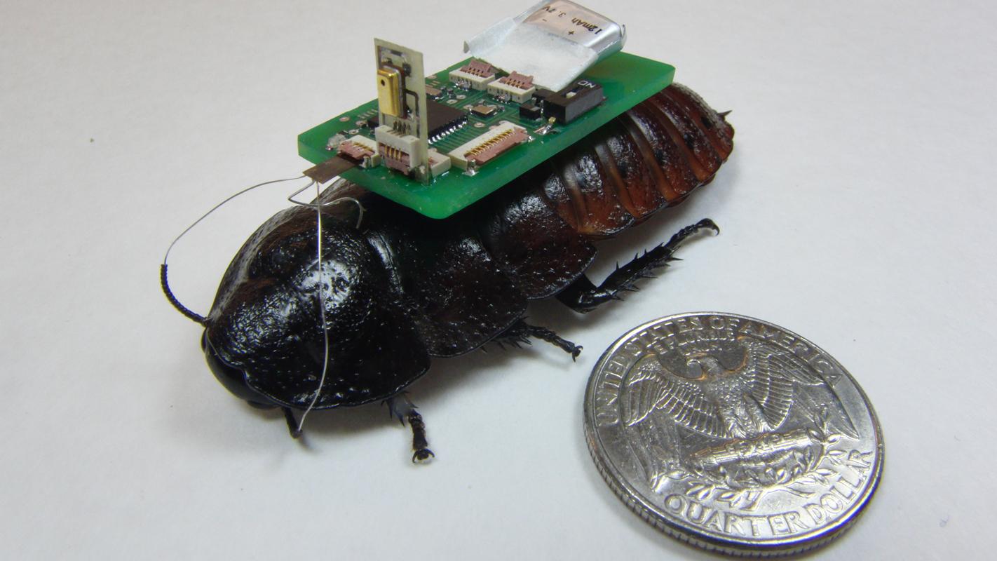 災害時に私達を助けてくれるのは、あの嫌われ者の昆虫!? G型ロボットが音で被災者の場所を探知する 2番目の画像