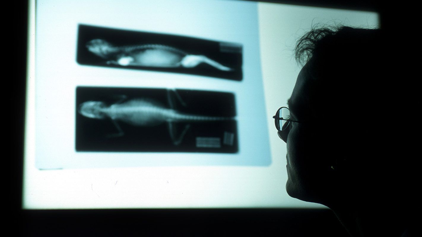A silhouetted faculty member at the College of Veterinary Medicine studies an x-ray.