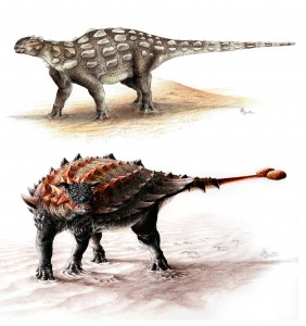 Gobisaurus compared with Ziapelta, an ankylosaur with a fully developed tail club. Artist: Sydney Mohr.