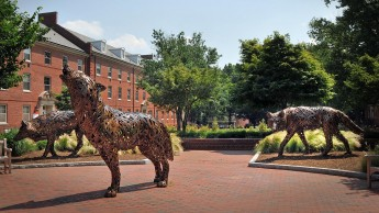 Bronze wolf statues on campus at NC State.