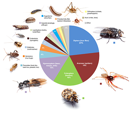 This graphic shows the proportional diversity of arthropod types across all of the rooms surveyed. Image credit: Bertone, et al. Click to enlarge.