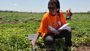 NC State alumna Maria Andrade kneeling in a field of sweet potato.