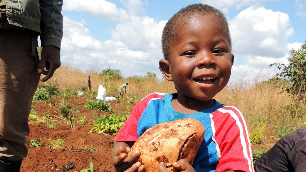 A young boy cradles a sweet potato in a field.