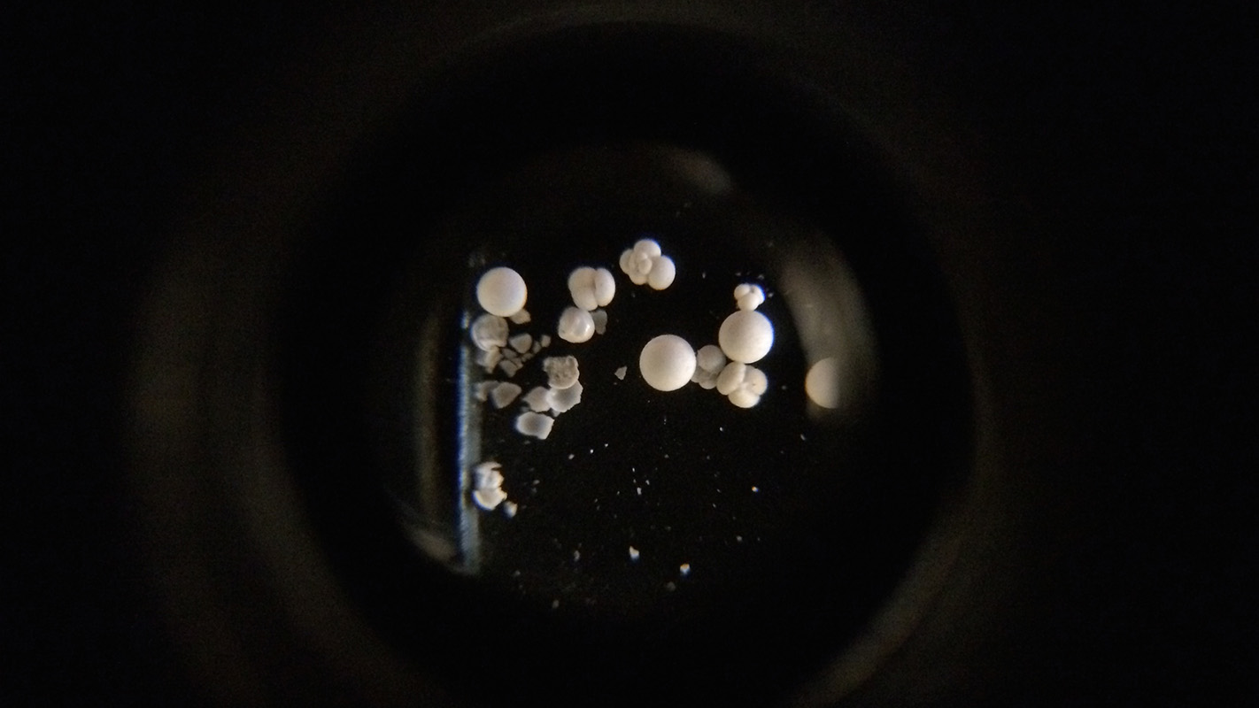 foraminifera viewed through a microscope