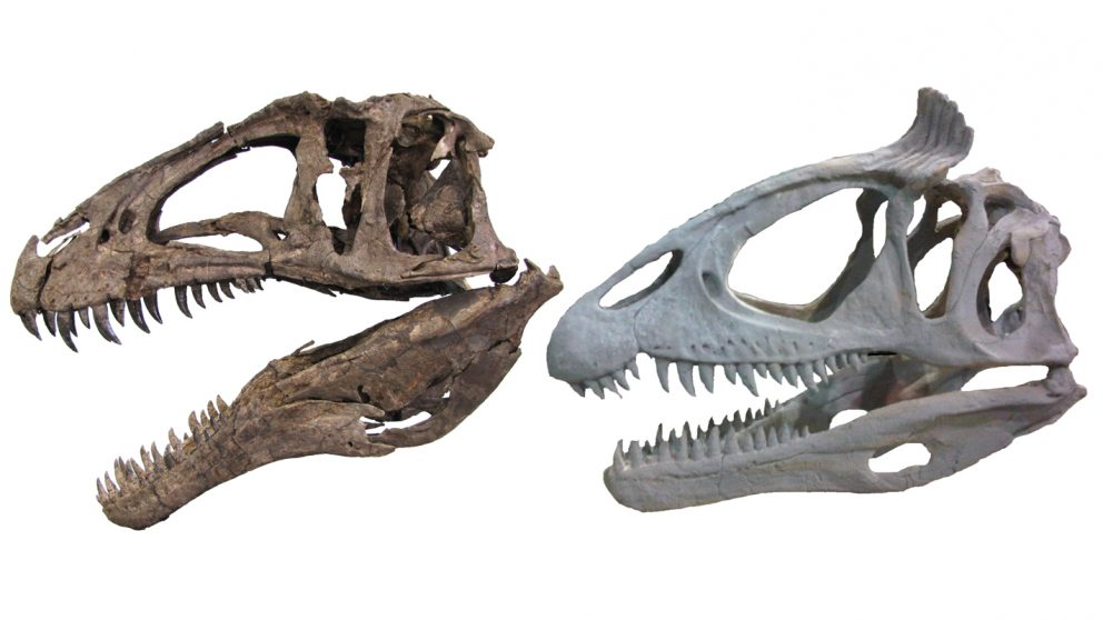 Ornamented Skulls Tied To Rapid Growth, Big Bodies Of Theropod Dinosaurs