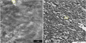 TEM micrographs of (a) ostrich claw sheath and (b) Citipati claw sheath show similar structure. Credit: Alison Moyer