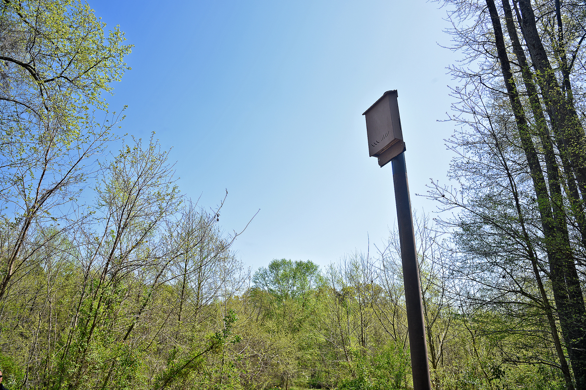 A bat box stands on the Rocky Branch Greenway Trail near Pullen Road on NC State's campus.