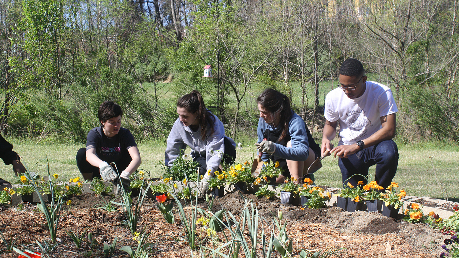 Volunteers plant flowers