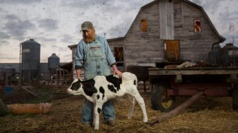 A farmer in overalls in front of a barn petting a calf