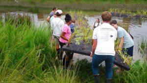 NC State students work with high school students to build floating islands on campus.