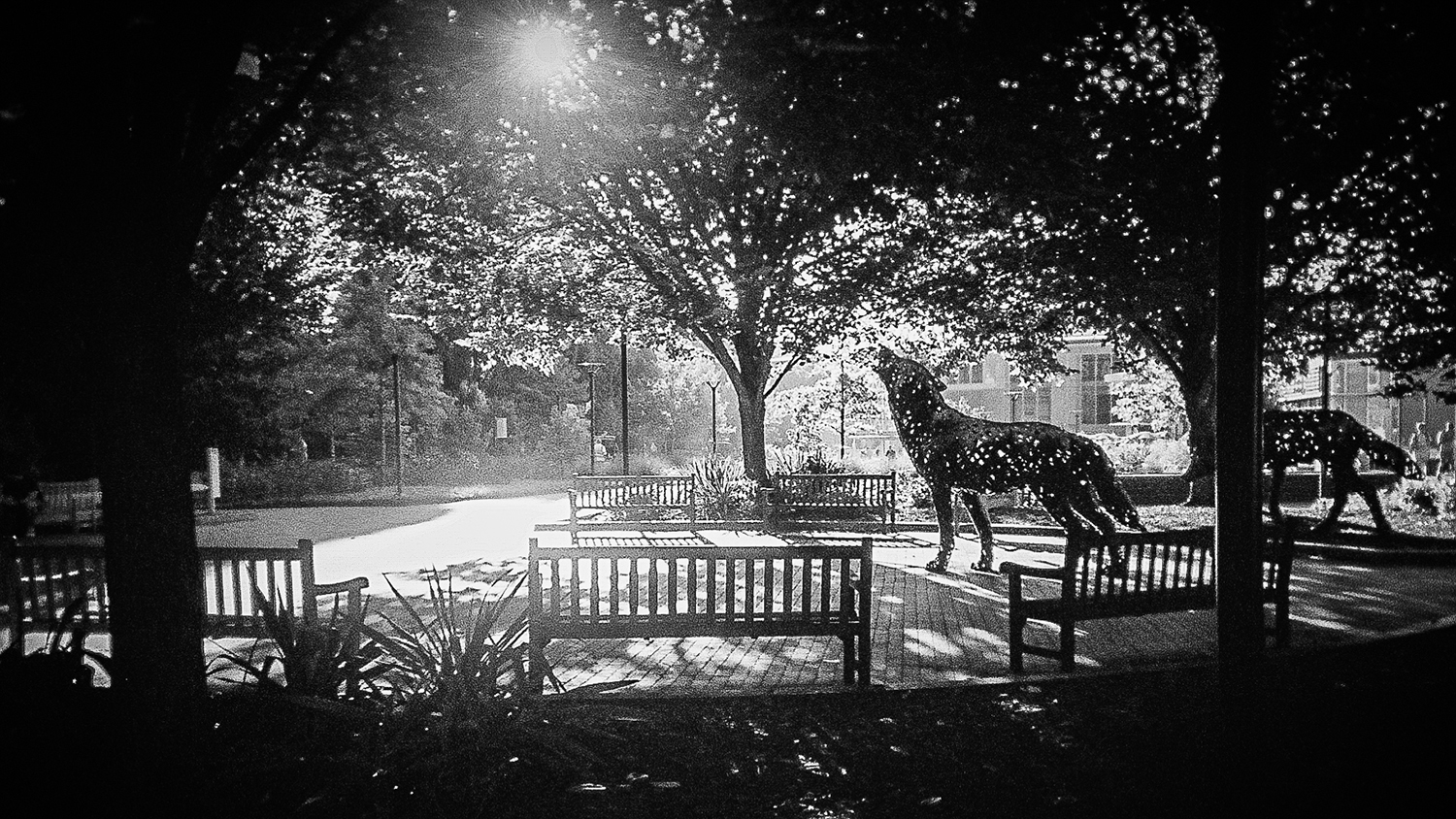 A black and white shot of NC State's copper wolves at dawn.