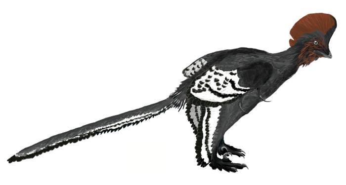 Illustration of Anchiornis huxleyi