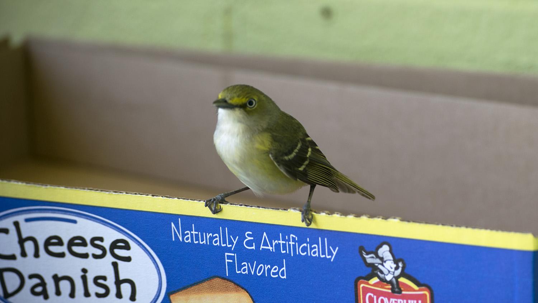 bird perching on a box