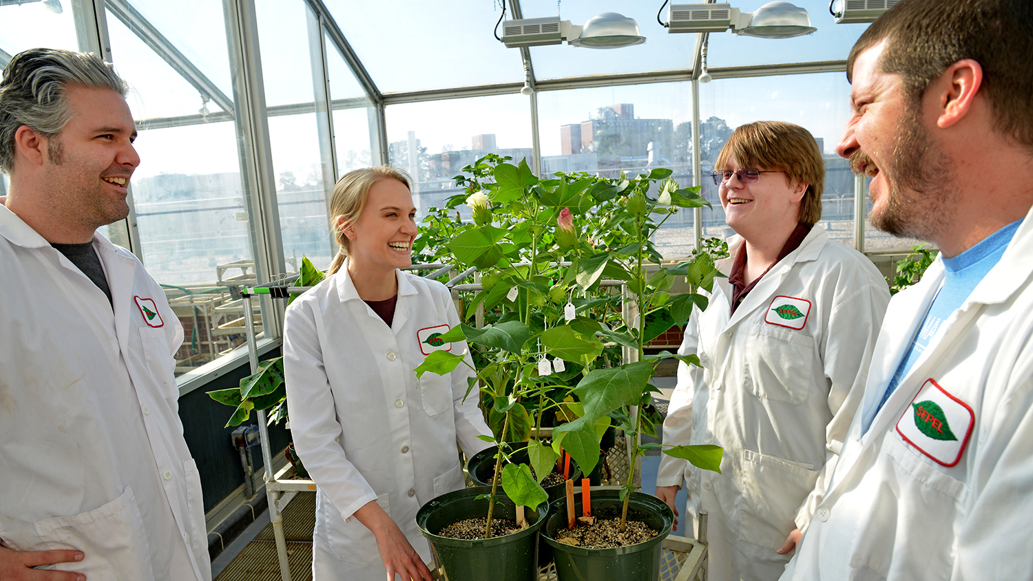 Students conduct research in the Phytotron greenhouse.