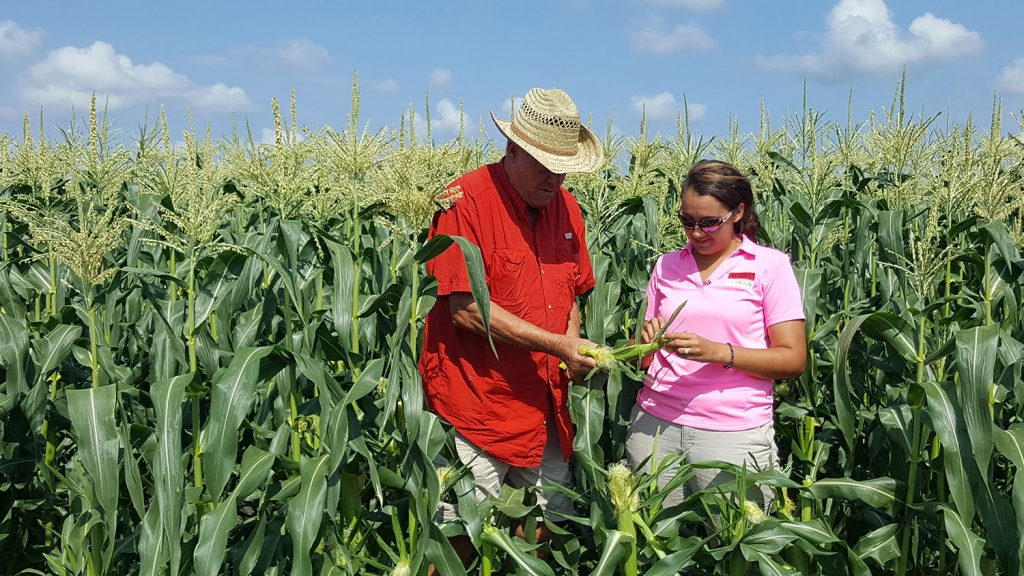 Man and woman examining corn in a corn field