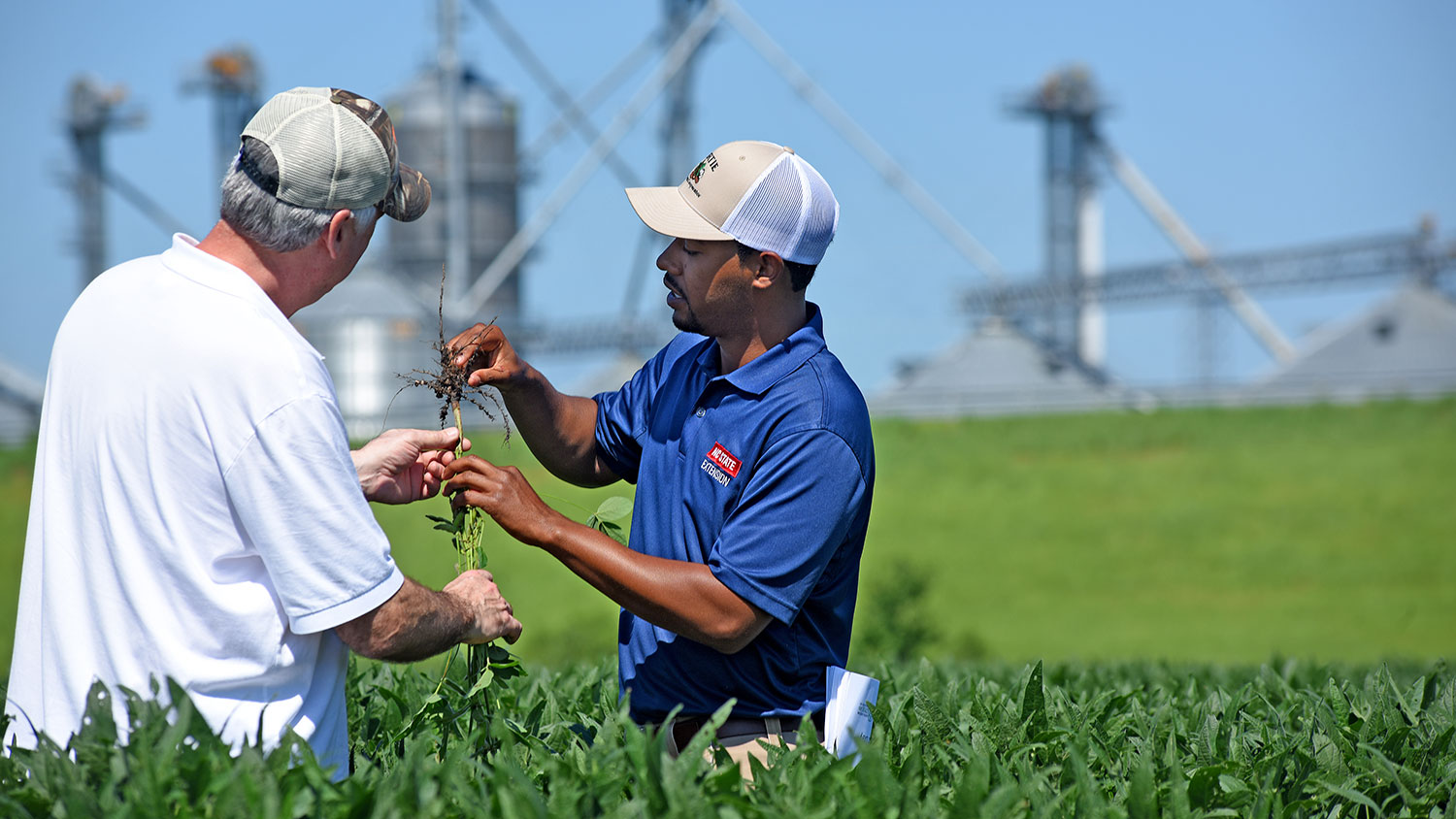 Two men holding a plant in a soybean field