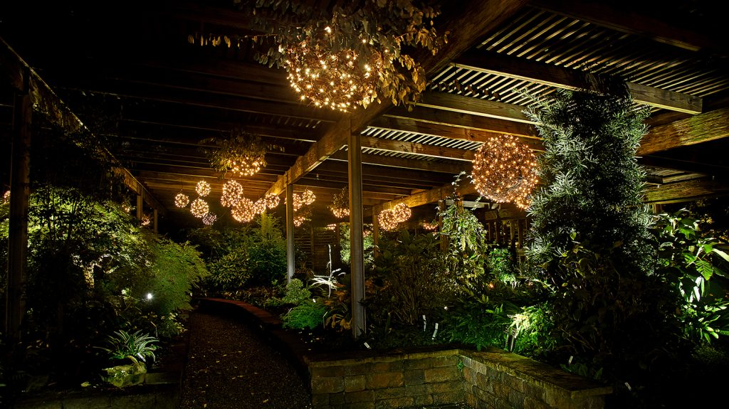 "A twinkling nighttime scene from the arboretum's annual ""Moonlight in the Garden"" program, one of the most popular events on the calendar. This image was taken in the award-winning Lath House."
