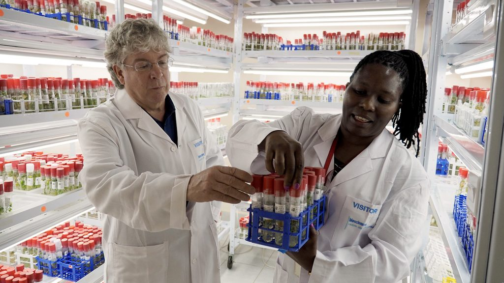 A man and a woman in white coats examine sweet potato samples in a lab in Nairobi, Kenya.
