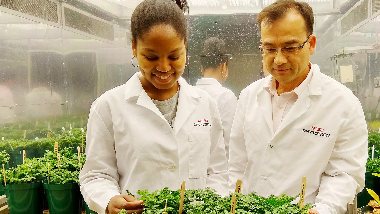 Study co-authors Rika Judd and De-Yu Xie with plants in NC State's Phytotron.