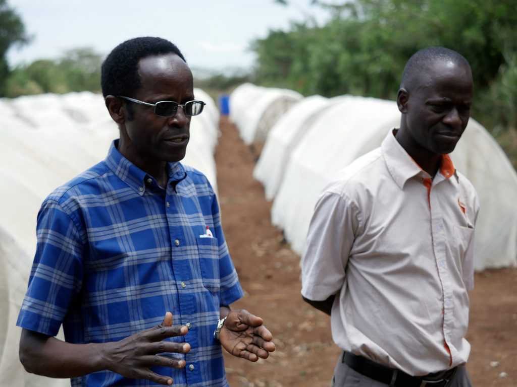 Two men in the foreground of a sweet potato research farm in Uganda.