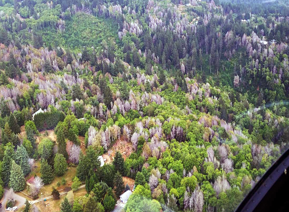 Aerial view of landscape with trees killed by sudden oak death