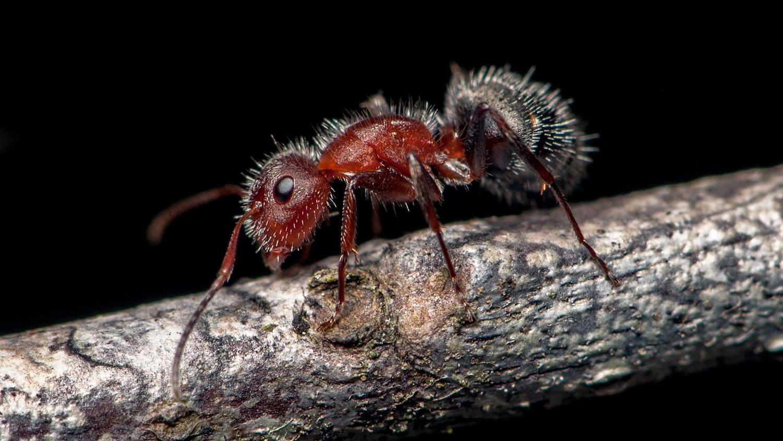Ant on a tree limb