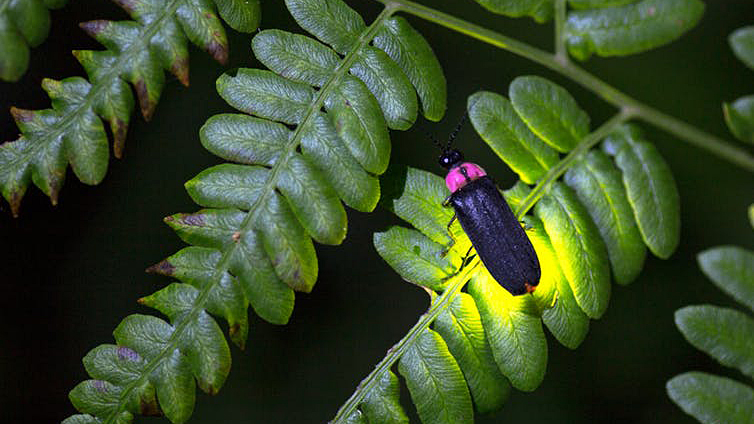Glowing firefly on a leaf