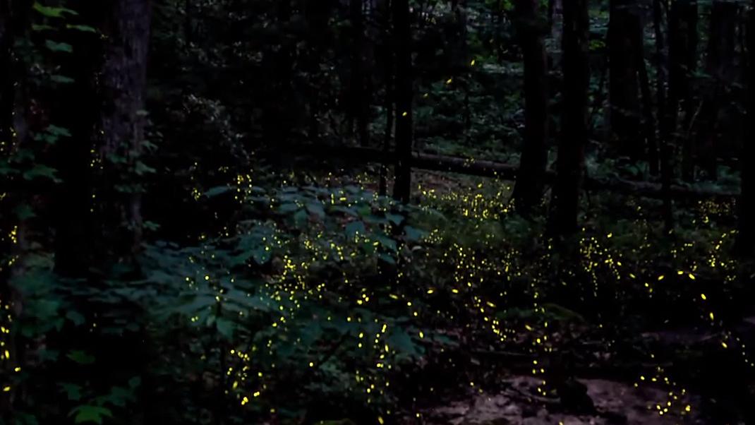 Fireflies in dark forest