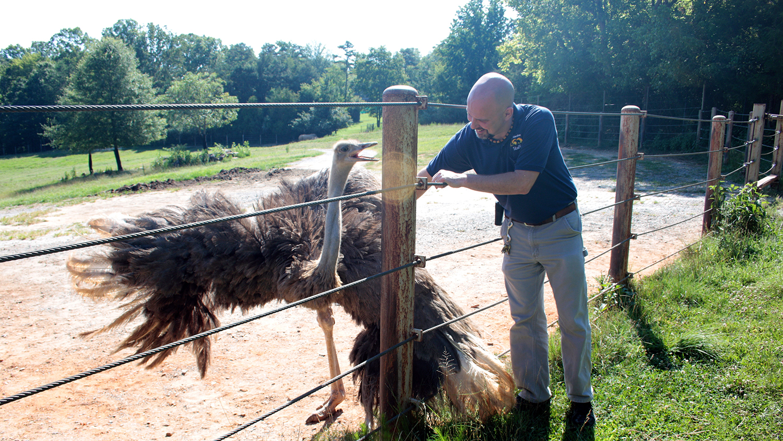 A man pats an ostrich behind a fence