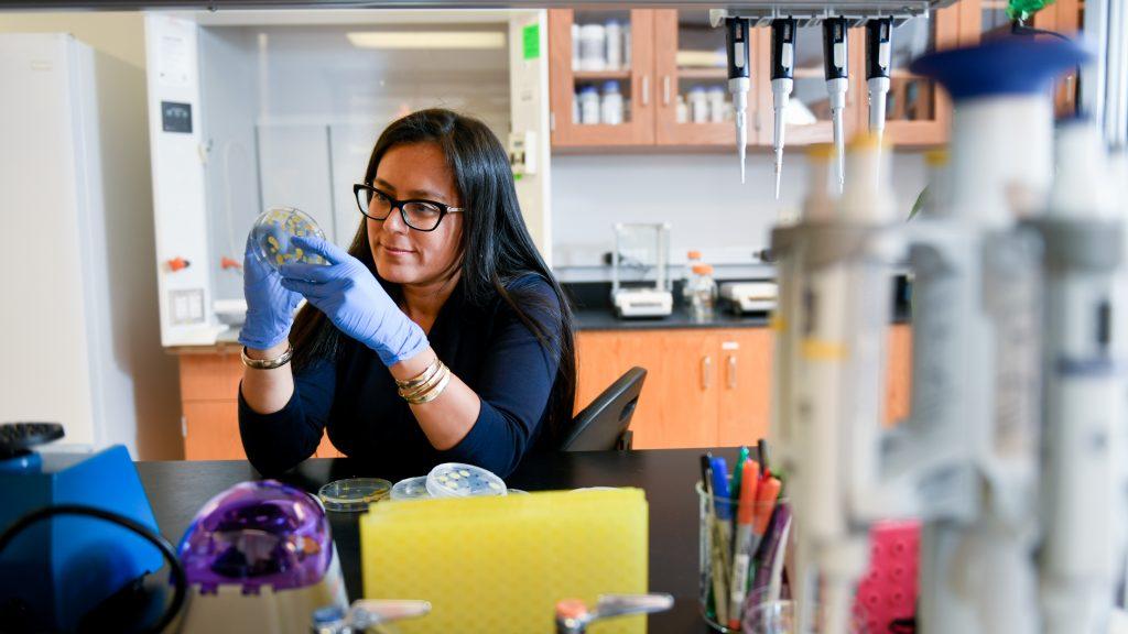 Alejandra Huerta examines a petri dish.