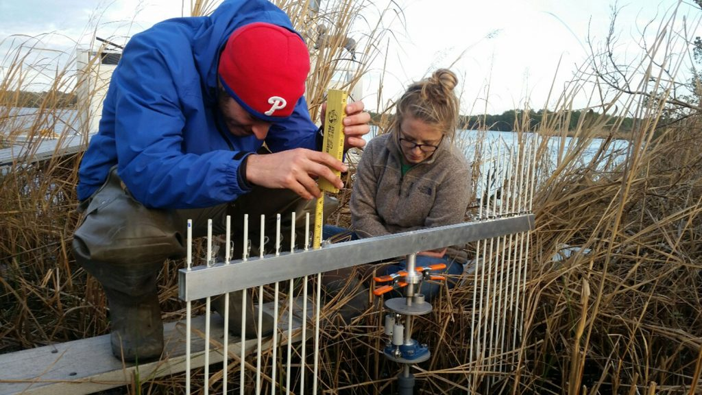 Employees of the City of Jacksonville collect data in the Wilson Bay marsh by measuring the pins' height above the vertical arm.