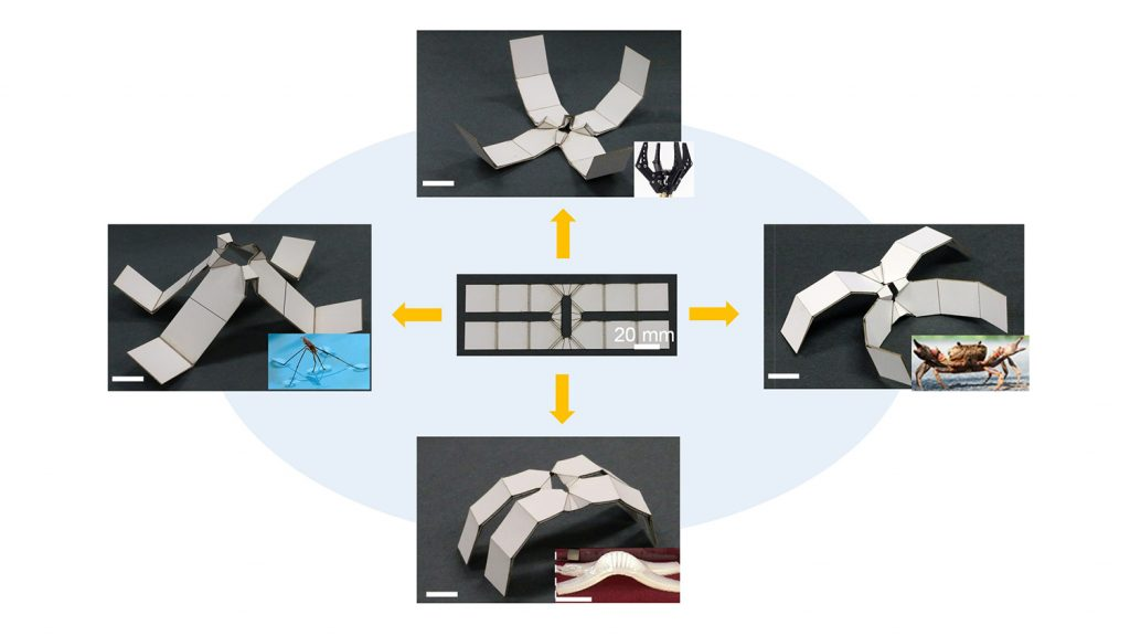 series of photos showing simple, self-folding robots