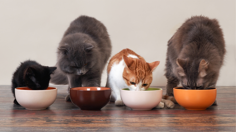 four cats at food bowls