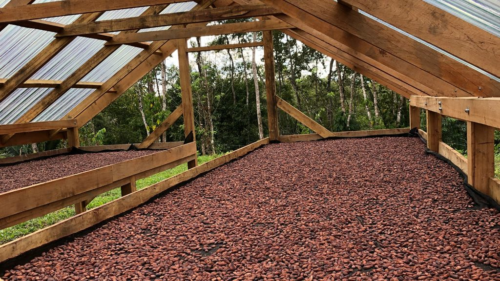 A cacao roasting rack on a farm in Belize