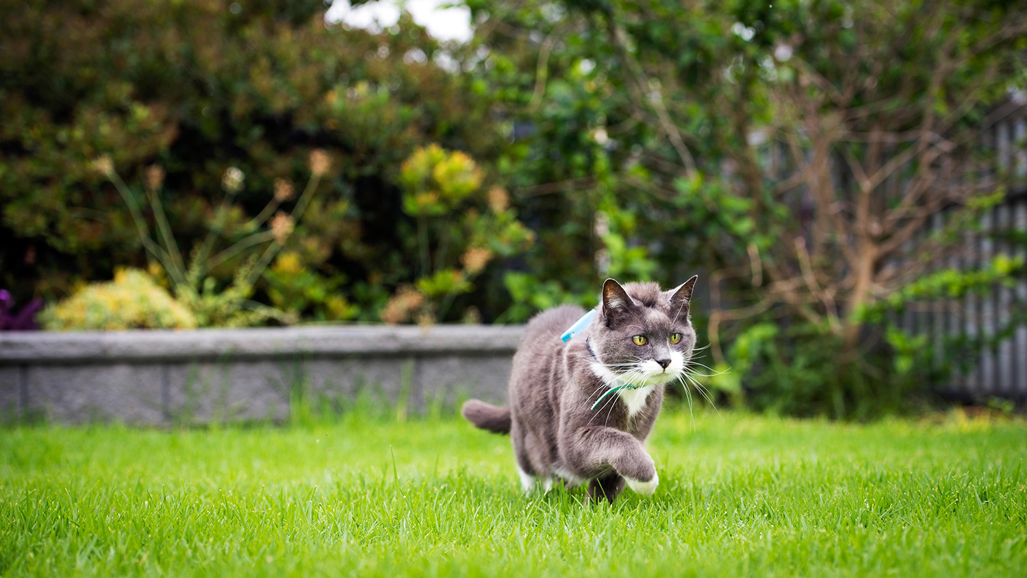 Keeping Cats Indoors Could Blunt Adverse Effects to Wildlife
