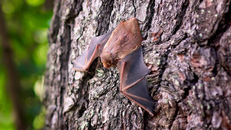 Bat hanging on tree