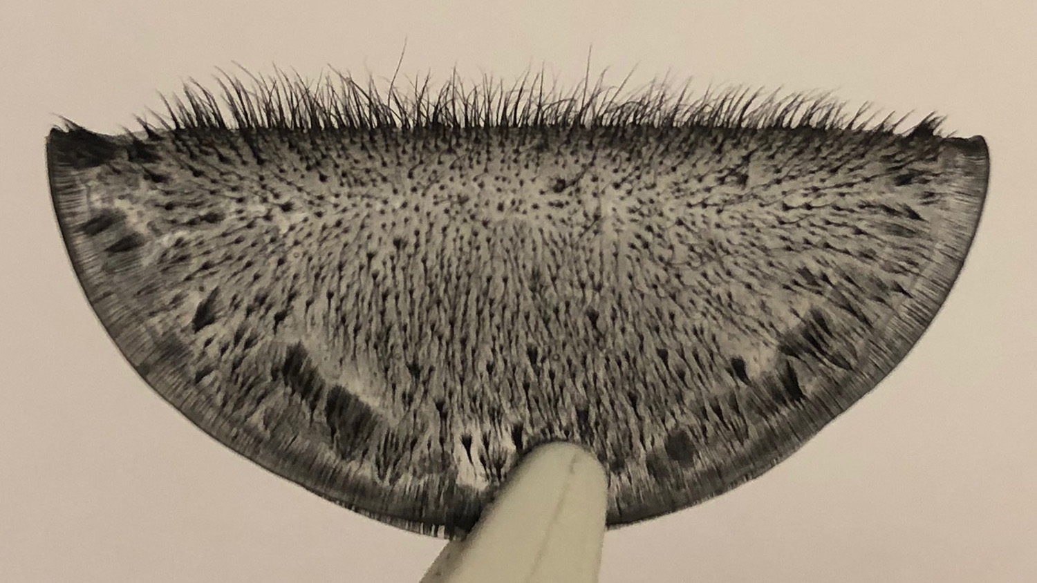 An array of magnetic cilia
