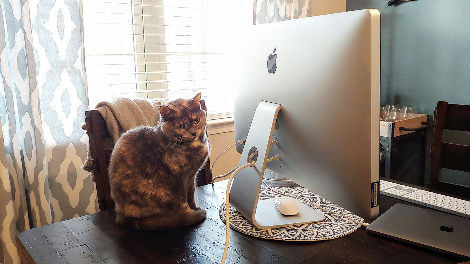 cat sitting on a desk by a computer