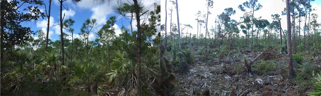 two photos. the left photo shows a lush forest. the right photo shows devastated scrub growth.