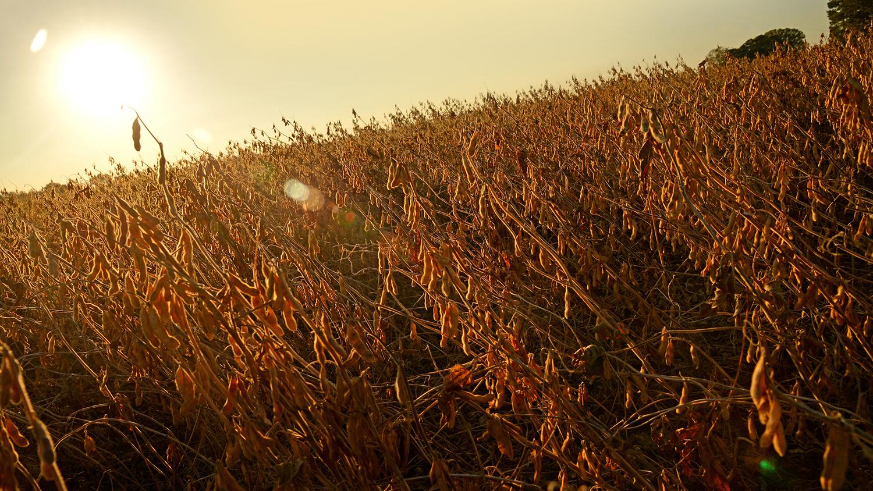 sun setting over a field