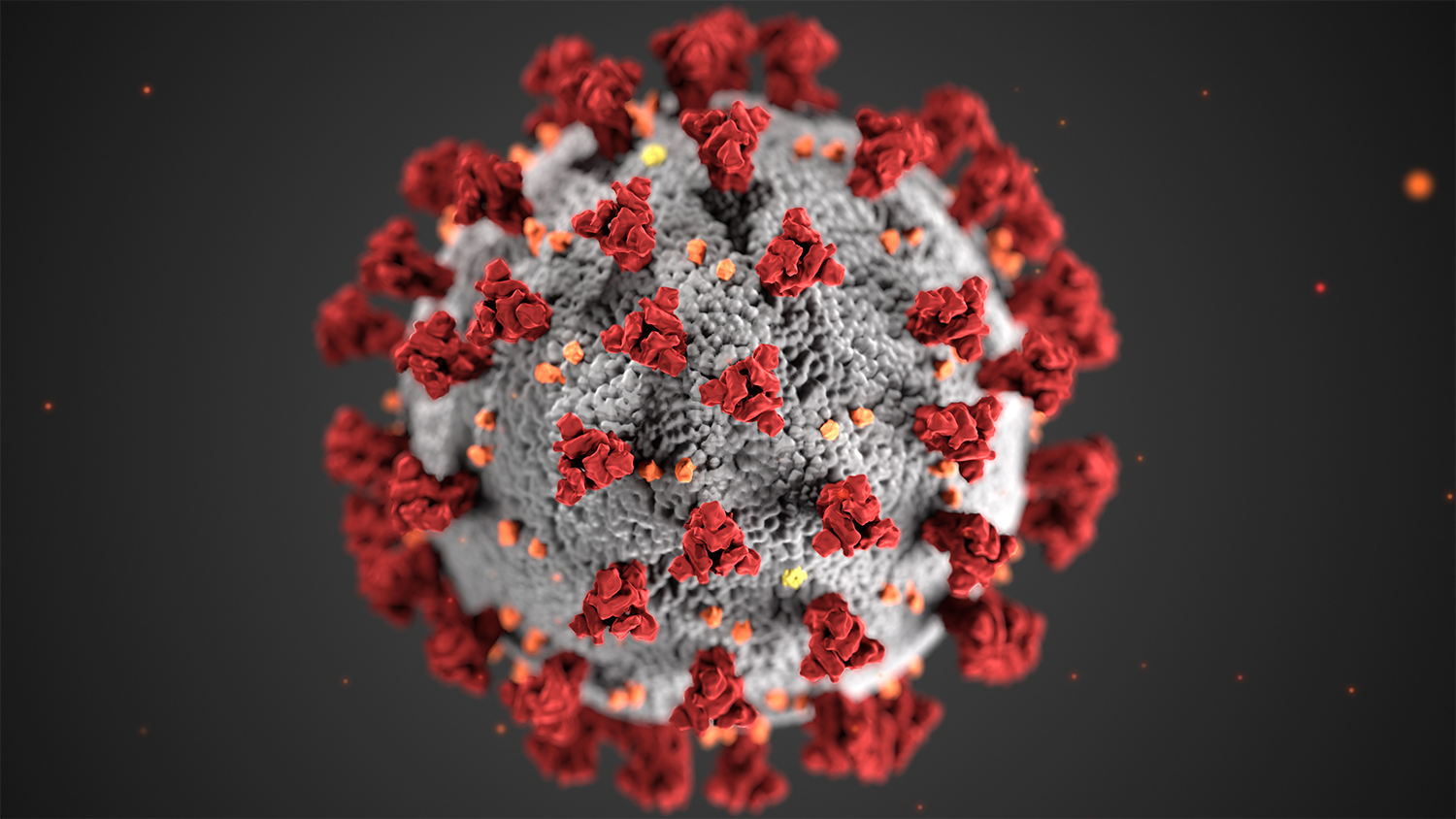 A graphic shows the ultrastructural morphology exhibited by coronaviruses. Graphic by the CDC.