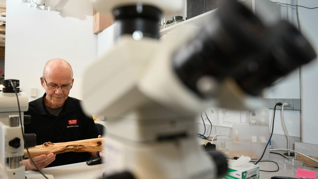 Professor Waldvogel sits at a microscope in his lab.
