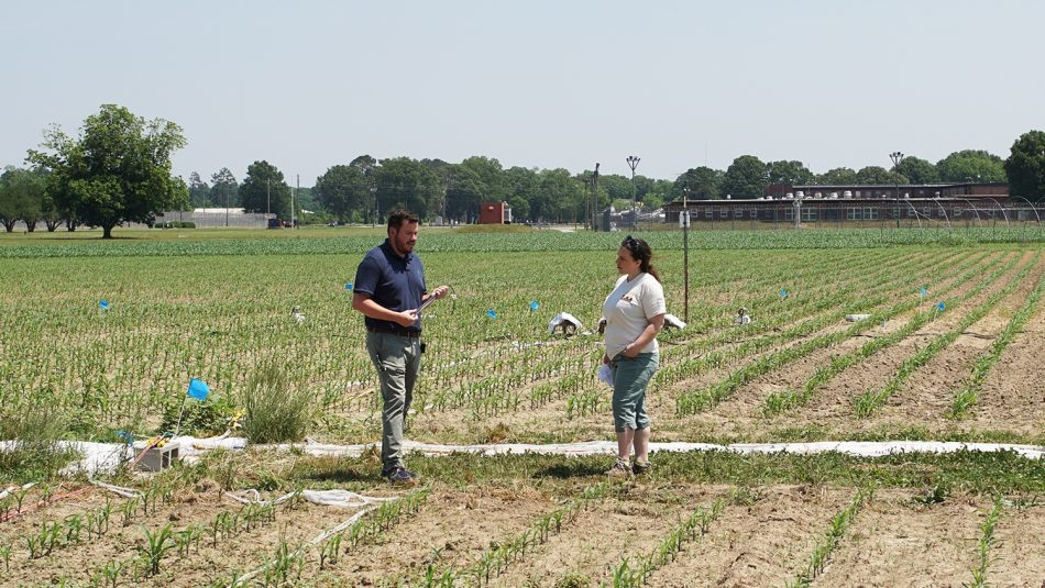 Man and woman talking in a corn field